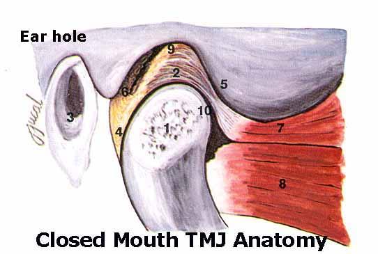 Temporomandibular Joint (TMJ) Dysfunction Physiology and Causes ...